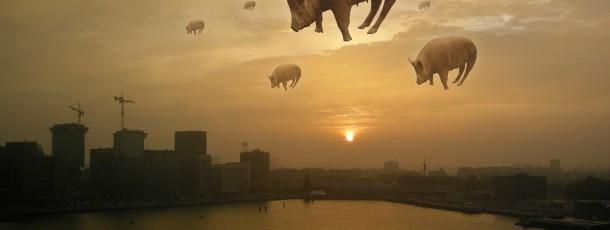 Wild-Rotterdam-02