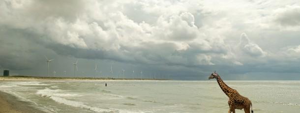 Wild-Rotterdam-04